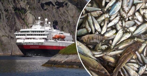 Hurtigruten miljösatsar – will be run on the dead fish