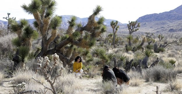Joshua Tree National Park in America close yet after vandals destroyed the famous trees cut down