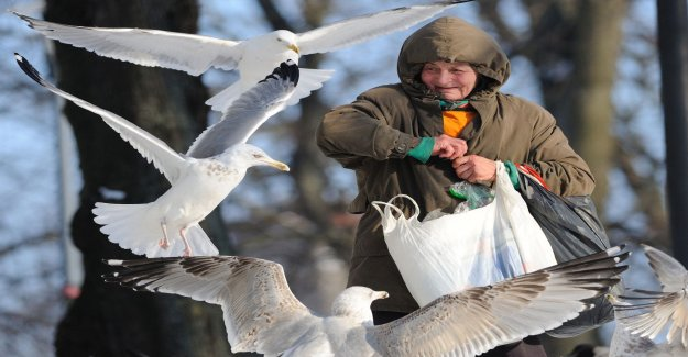 The municipality warns: Birds may stop flying if they get the bread