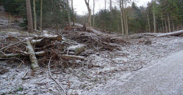 Wood impact on the Uetliberg takes longer