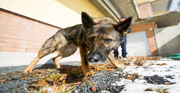 Free police dog on a walk found the drugs