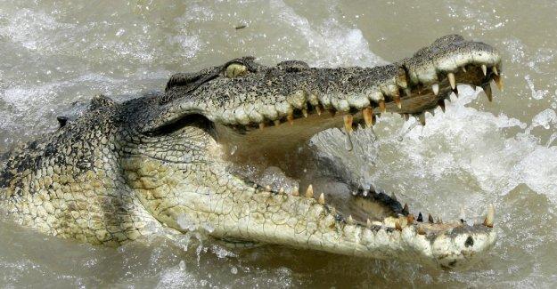 Man killed in krokodilattack in Malaysia