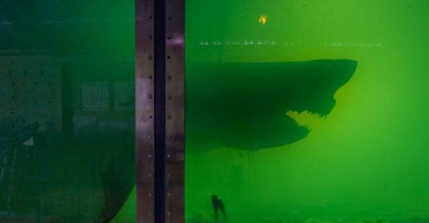 Photographer explores abandoned zoo and knock on mensenhaai on the strong water