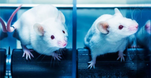 Alzheimersymptomen in mice are decreased by treatment with light and sound