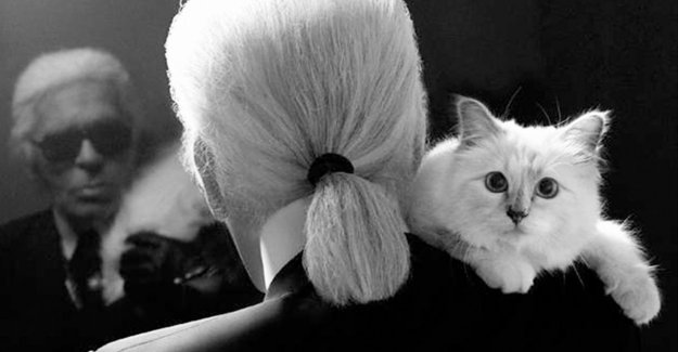 Cat Karl Lagerfeld launches clothing line