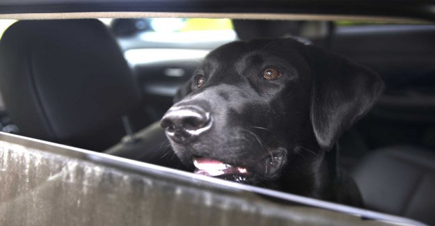 Left dog in hot car charged
