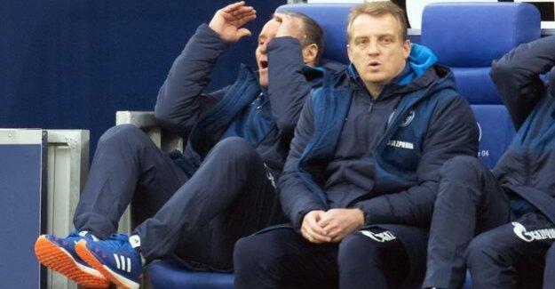 Schalke lose again : Huub Stevens' Comeback fails