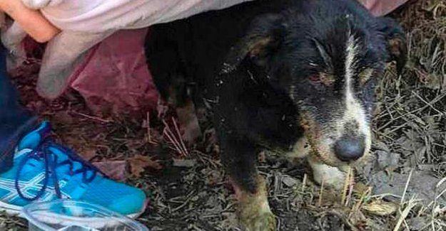 Dog alive was buried by his master, scramble out of the grave
