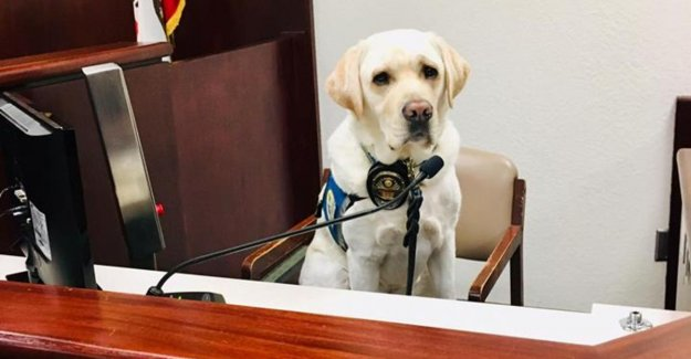 Service dog Raider is helping 12 children during emotional court case against parents who them maltreated and abused