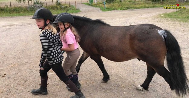 The pony Storm saved Stina, 9, out of the depression