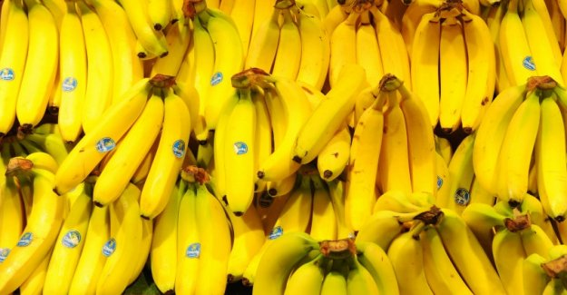 Lidl is not to rise but to Fairtrade bananas