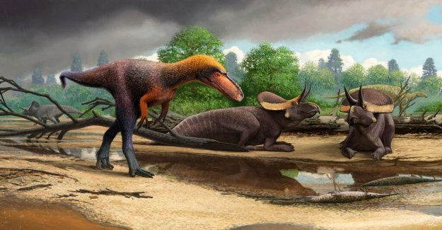 Small dinosaur with fearsome relative detection