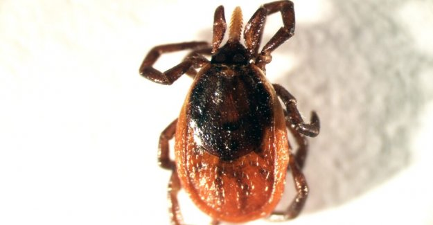 Tick with dangerous TBE variant seems to be spreading