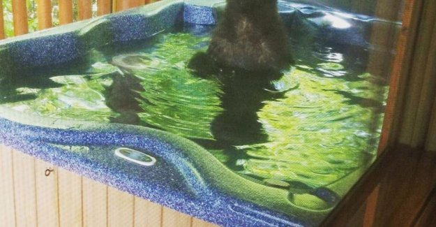 Tourists can catch black bear in their hot tub is to enjoy