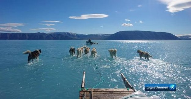 Climate change in Greenland: sled dogs that run on water