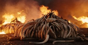 Movie review: Antropocen – human era as beautiful as horrific