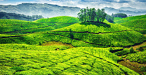How to plan a memorable trip to Munnar?
