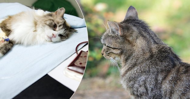 Accommodation, be warned – several cats poisoned