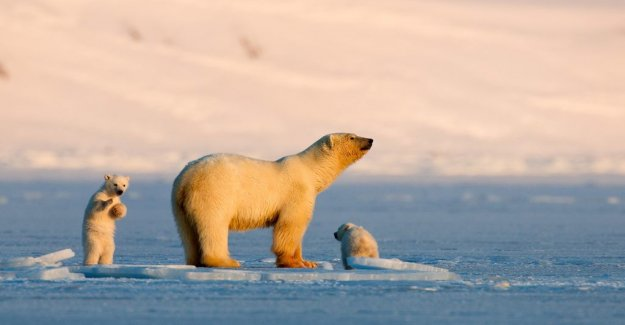 Award-winning documentary about rapid climate change on Svalbard