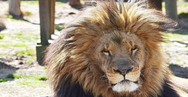 Cage escaped lion killed a 22-year-old woman in a zoo in the USA