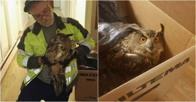 Eagle owl was stuck in fishing line – then became Nicasio, 60, to the rescue