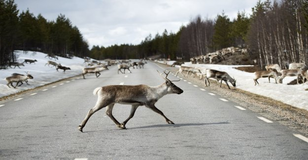Early warning system for reindeer delayed