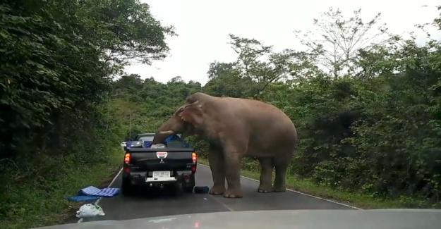 Elephant looted cars: - It was creepy