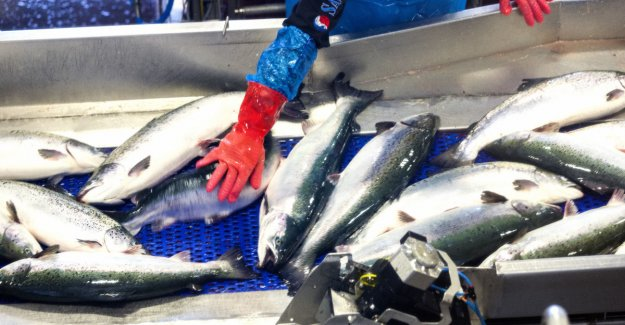 Expect a good year for salmon price