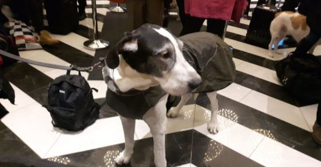 Hundreds of dogs own you a drink-free party at the hotel in silence - Pissapartio guard, buffet hang out goodies
