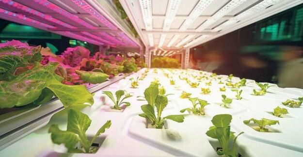 Indoor Farming : enlightenment for the vegetables