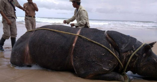 New tsunami can end of the Javan rhino mean