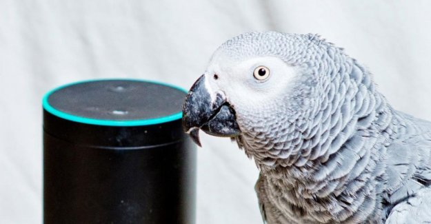 Parrot tries to eat to order via spraakbesturingssoftware