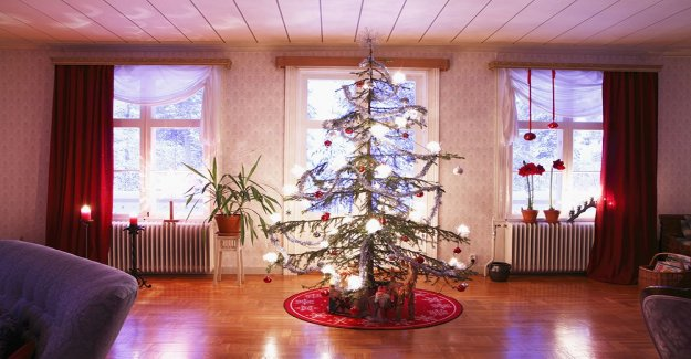 So survive your christmas tree – without barra