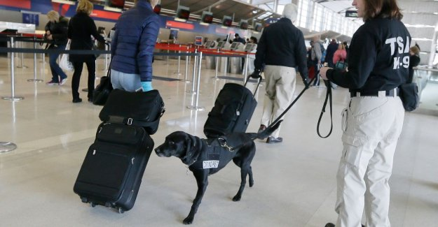 Soon, 'friendly' snuffelhonden at U.s. airports: Dogs with lop-ears are less intimidating