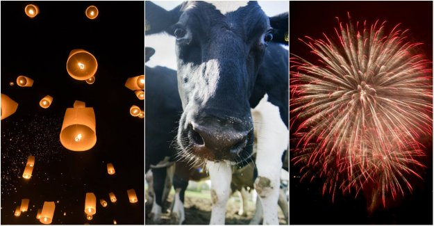 The Swedish farmers ' appeal: Celebrate the new year without harming the animals