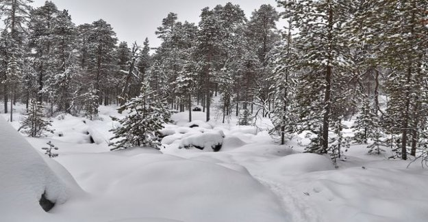 The photo to the left the tourists disappeared into the woods in Inari - told me on the phone, he sees only the trees