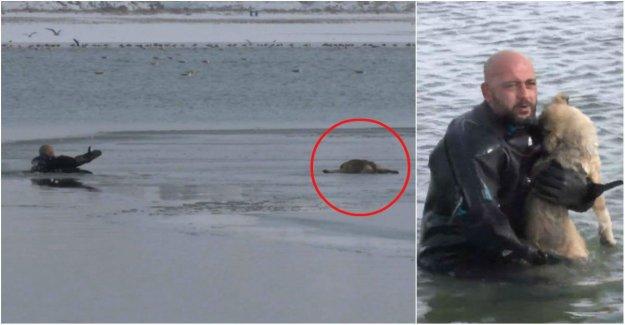 The police crushed the ice to rescue the puppy from the ice floe
