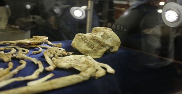 The researchers scanned the human ancestors the brain - Little Footi brain half-monkey, half-human