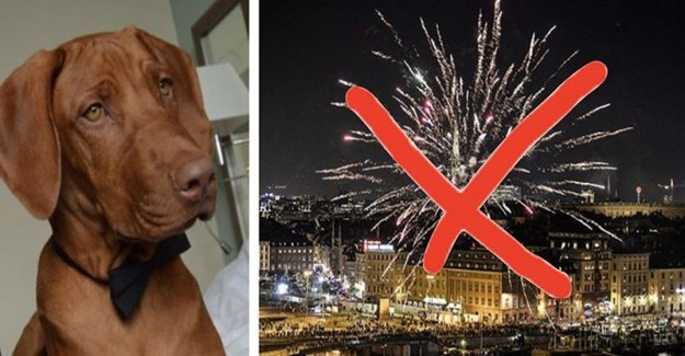This takes the dogs into hotels – to get away from the worst of the night