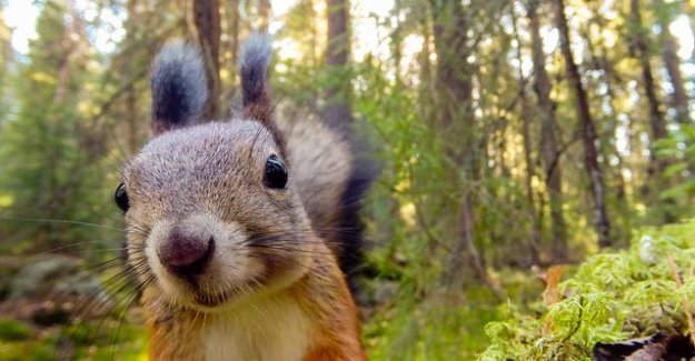 Today on tv a gorgeous, 4 years to make a nature documentary: Jari photo squirrel really close, crane kicked the camera over