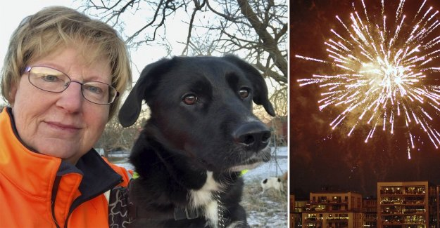 Together with the tricks – to soothe the dog in the new year