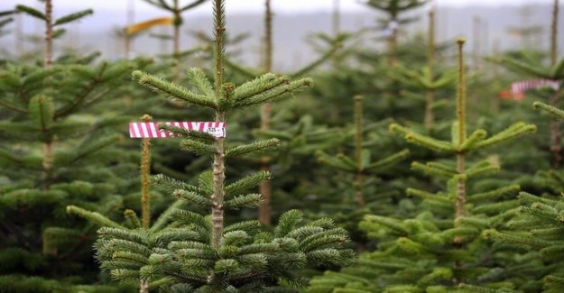 Where there are needs for Christmas trees for a building permit
