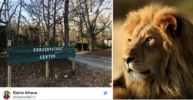Young woman killed by lion in the united states