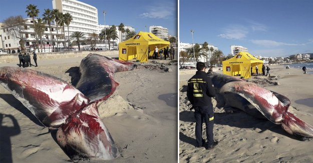 6 tons of heavy choice of death – is believed to have eaten plastic