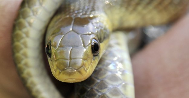 60 snakes from the Munich apartment saved