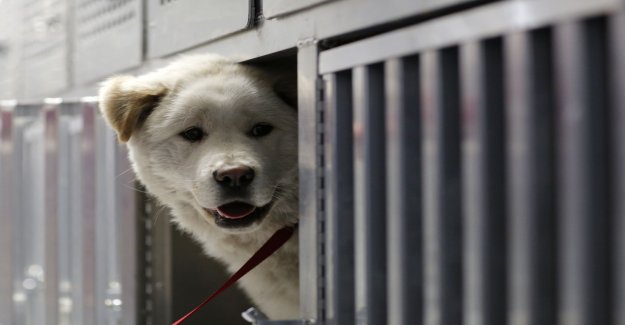 Animal rights group criticized – killed dogs