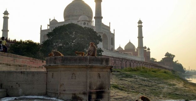 Catapults used to be monkeys to Taj Mahal road to chase after the kidnapping of a baby with a fatal outcome