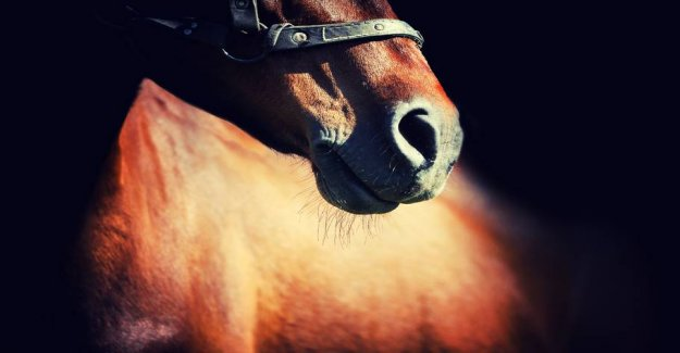 Five boys scared caroline's horse to death with firecrackers - none of them can be punished