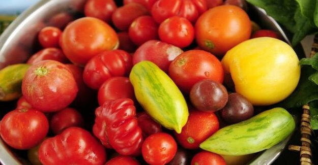 Genetic modification : The tomato: red and round, and now sharp