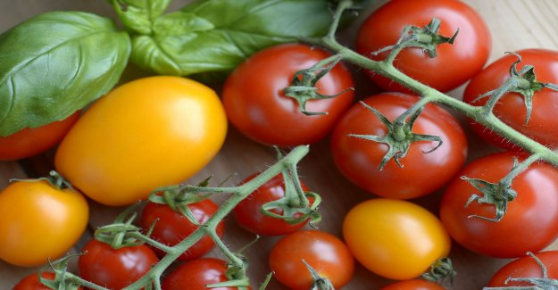 Grow your own tomatoes – how to make you